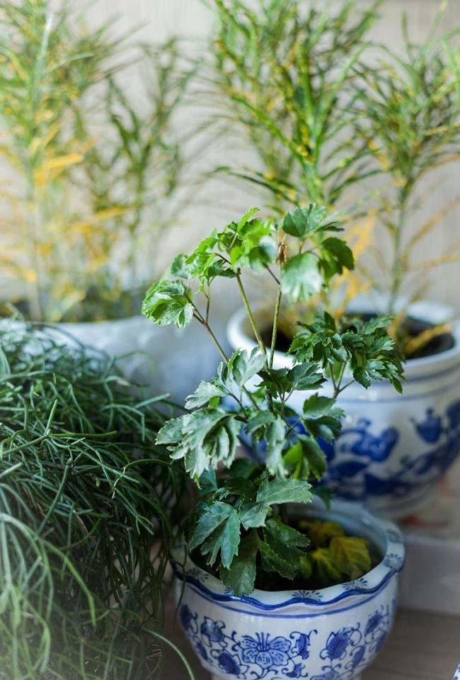 Plants for World Cup Decoration
