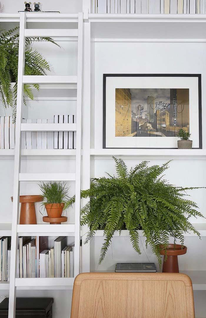 Color and life for white environment with ferns
