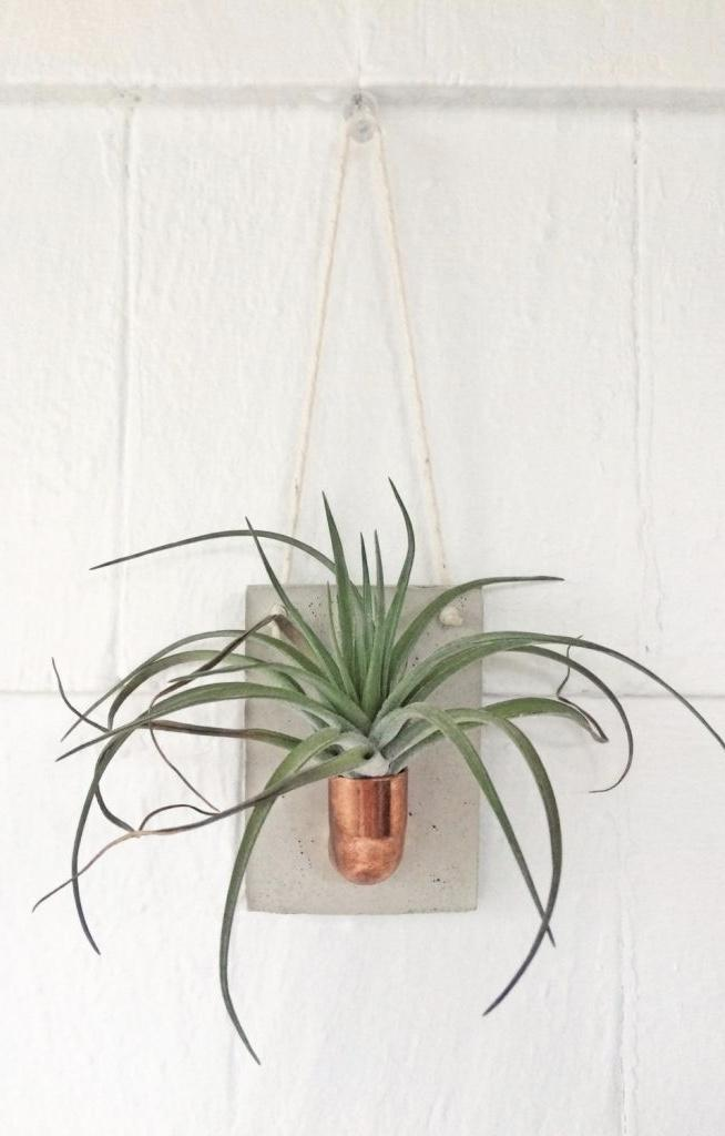 Cement wall vase