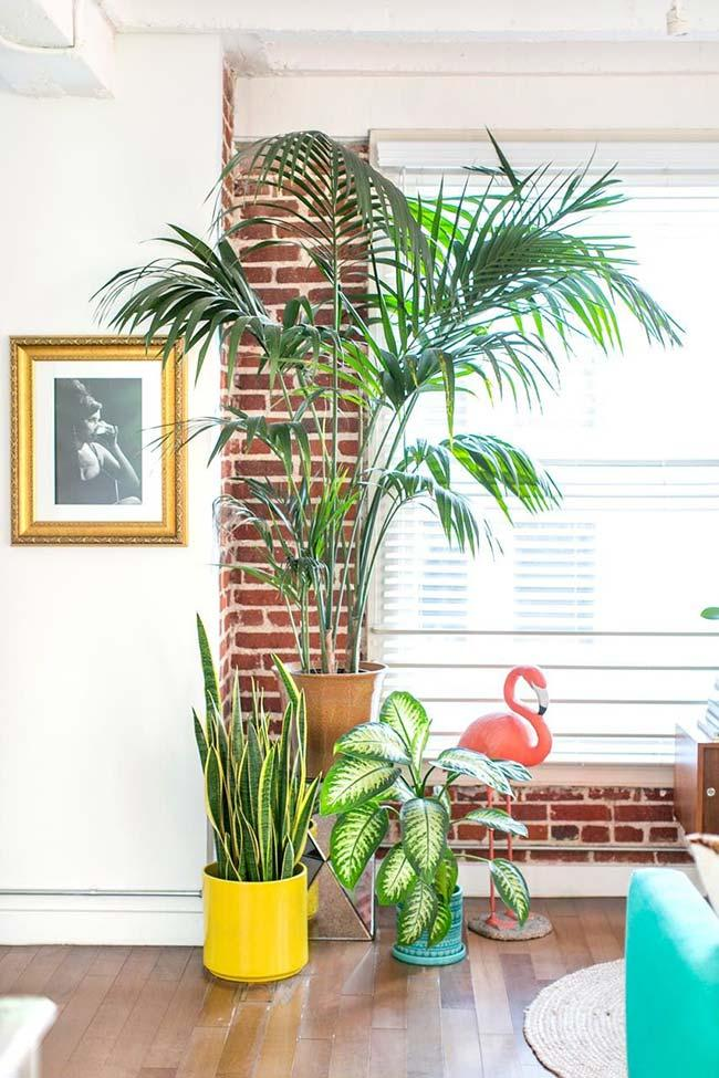 Vase of raffia palm stands out among other plants