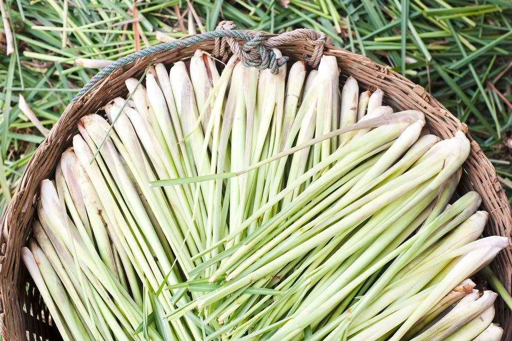 Lemongrass essence for environment flavoring