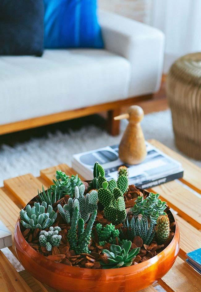 Copper vessel was taken by different species of succulents
