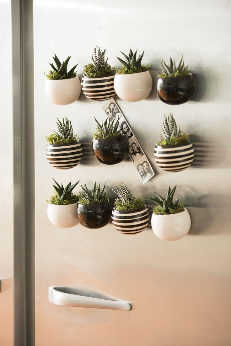 The white stripes are not only in the succulent; Look what a beautiful idea.