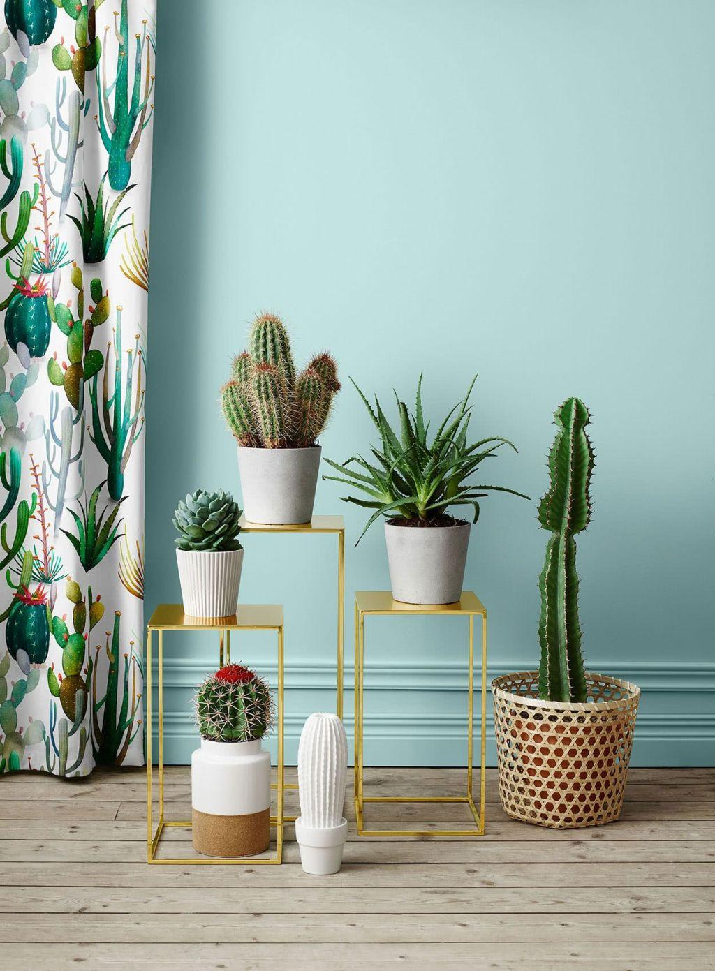 Cacti at home: 60 inspirations to decorate with the 30 plant