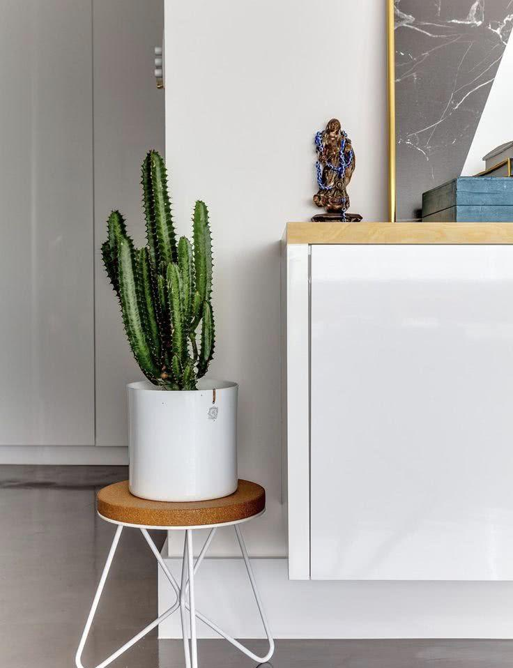 Cacti at home: 60 inspirations to decorate with plant 17