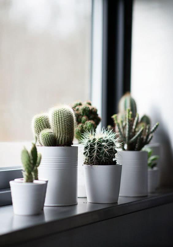 Cacti at home: 60 inspirations to decorate with the plant 35