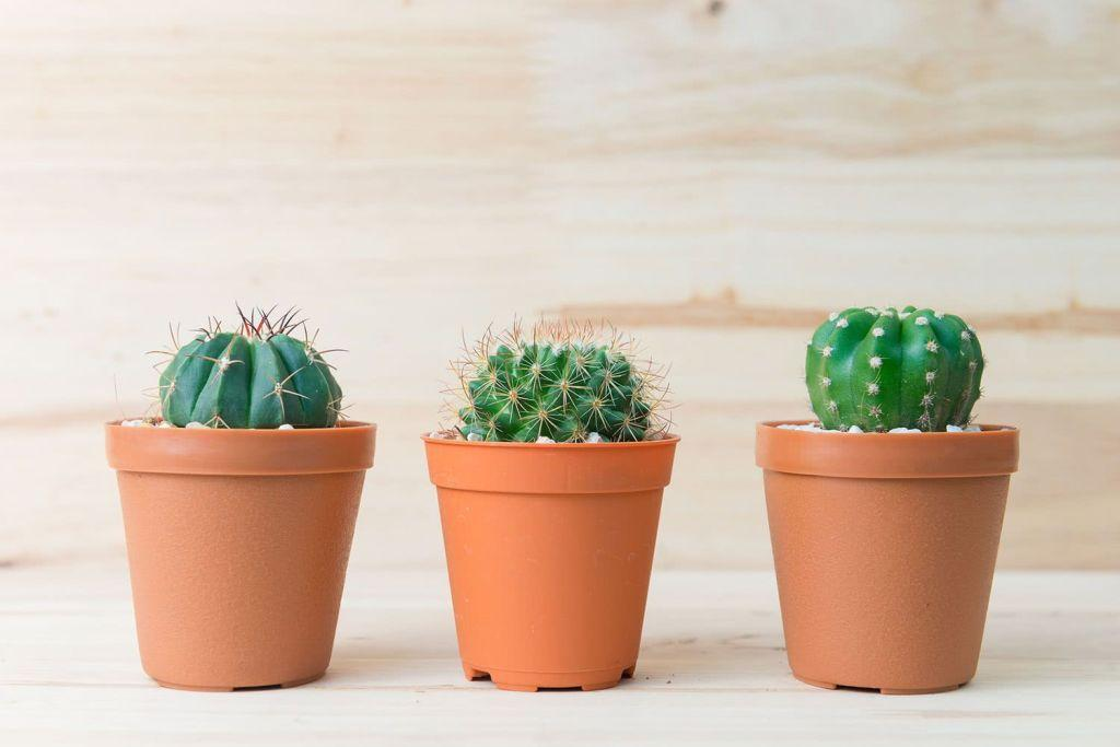 Cacti at home: 60 inspirations to decorate with the plant 19