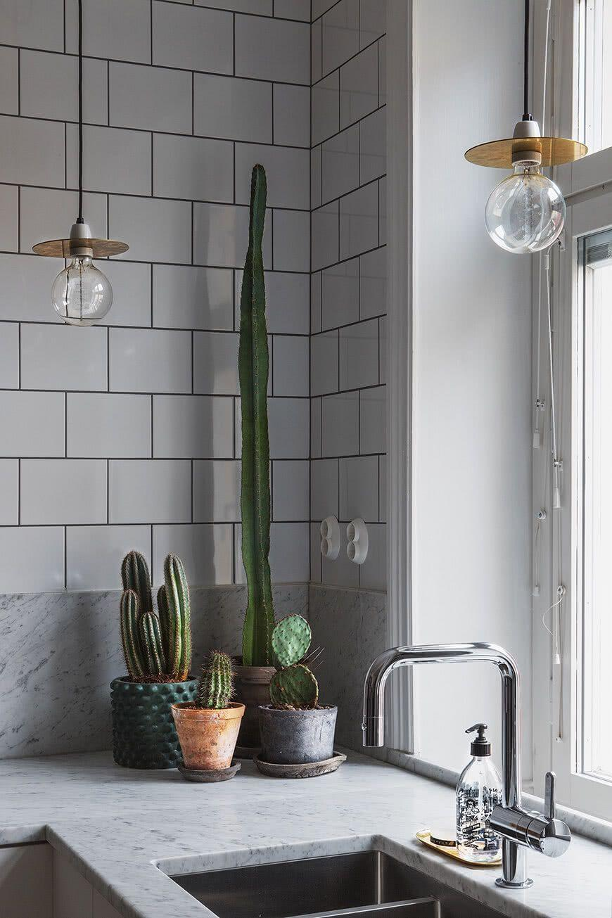 Cacti at home: 60 inspirations to decorate with the 33 plant