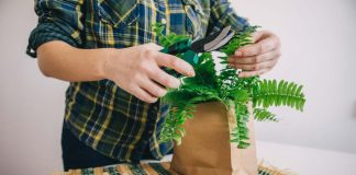 How to care for fern: see important tips for growing